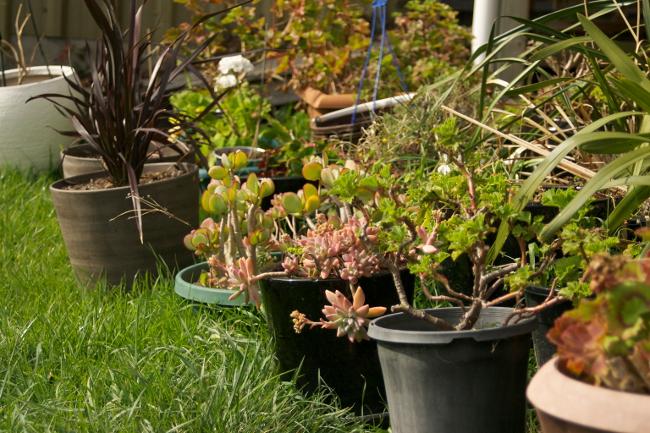 pot plant collection