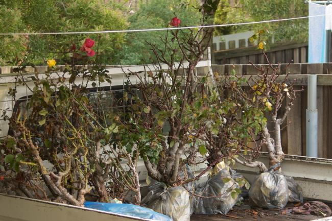 roses in truck