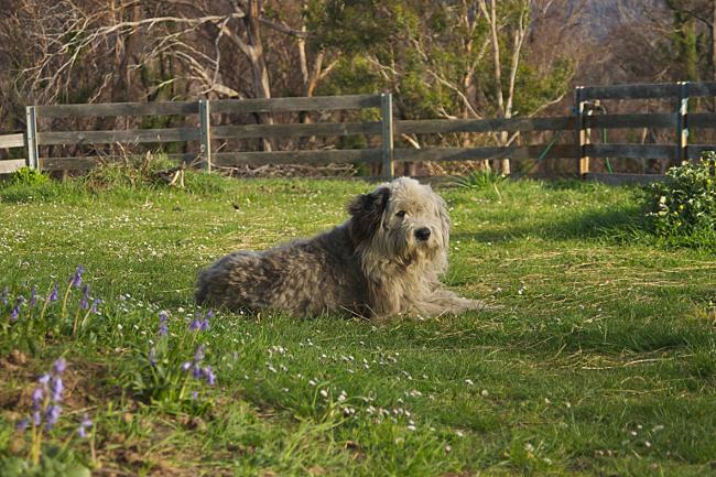 ralph in grass