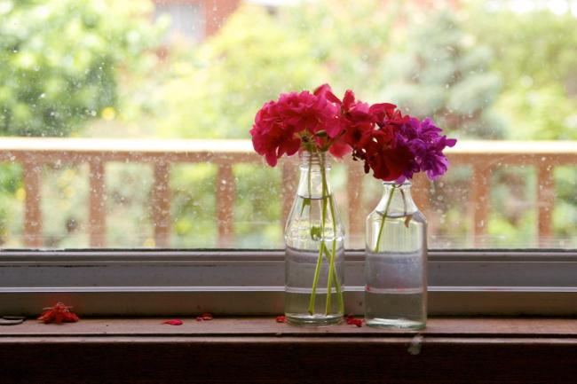 geraniums kitchen
