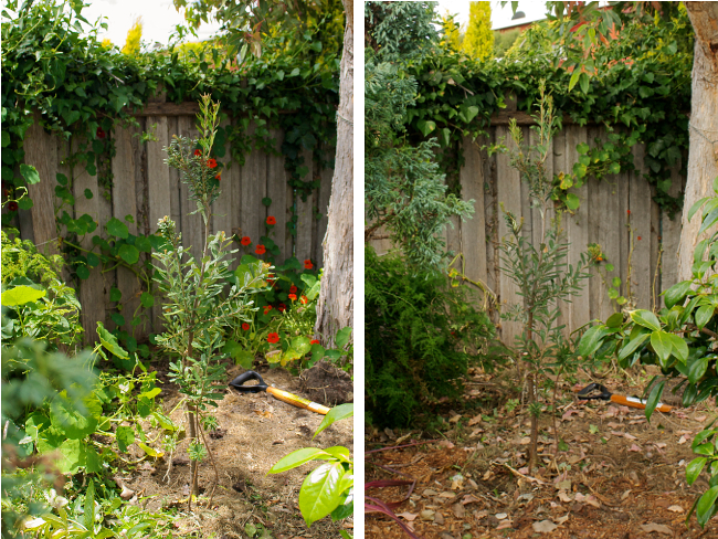 banksia cleared