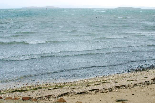 dunalley shore