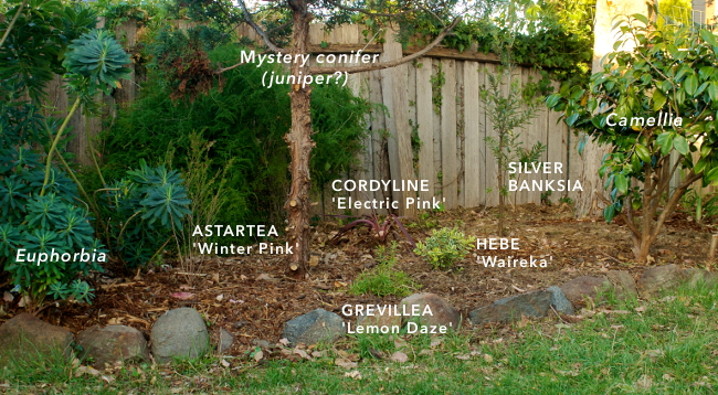 border plants 1