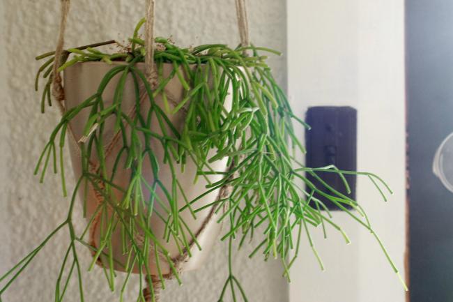 mistletoe cactus macrame