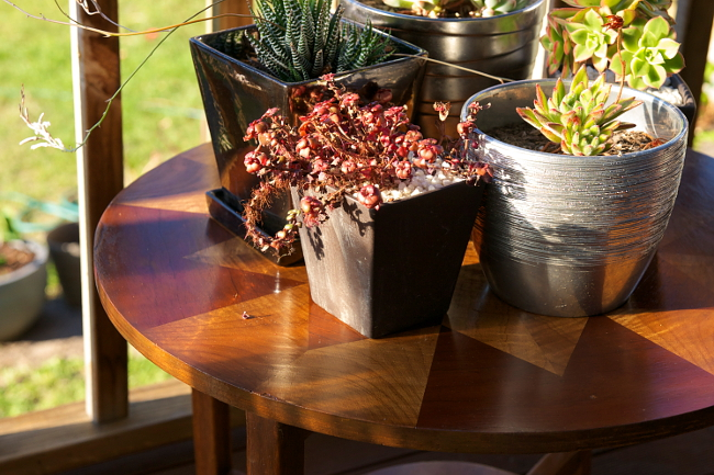 inlay table succulents