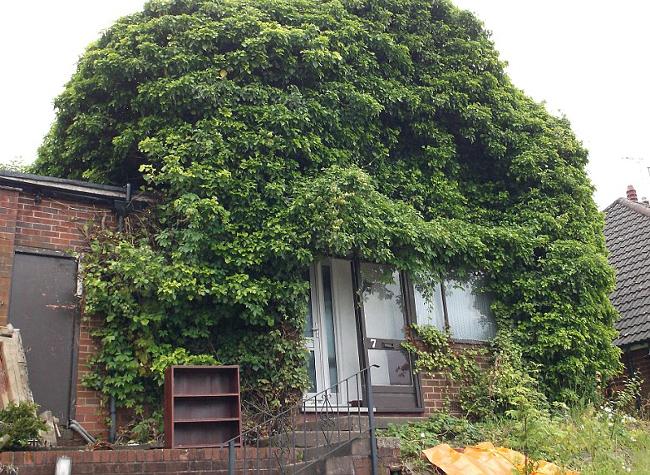 ivy engulfs house