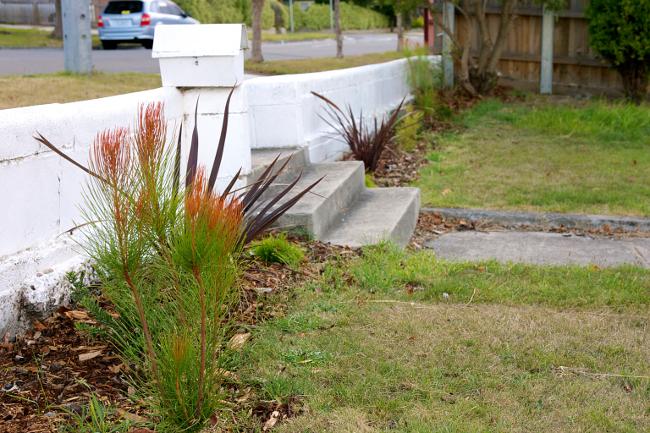 hedge wall 3