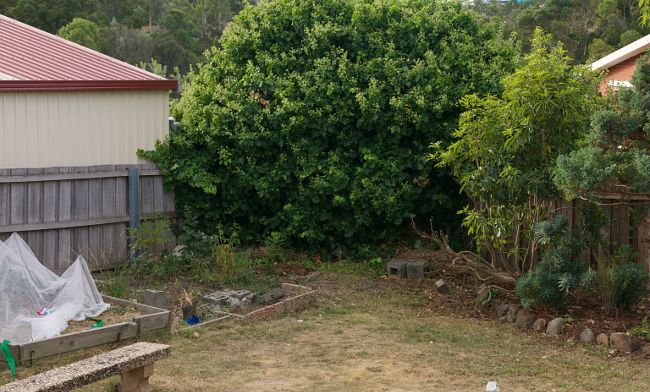 ivy corner before