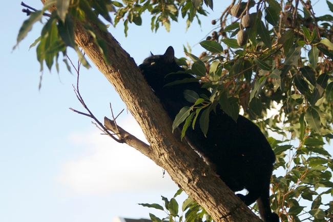 tree cat 2