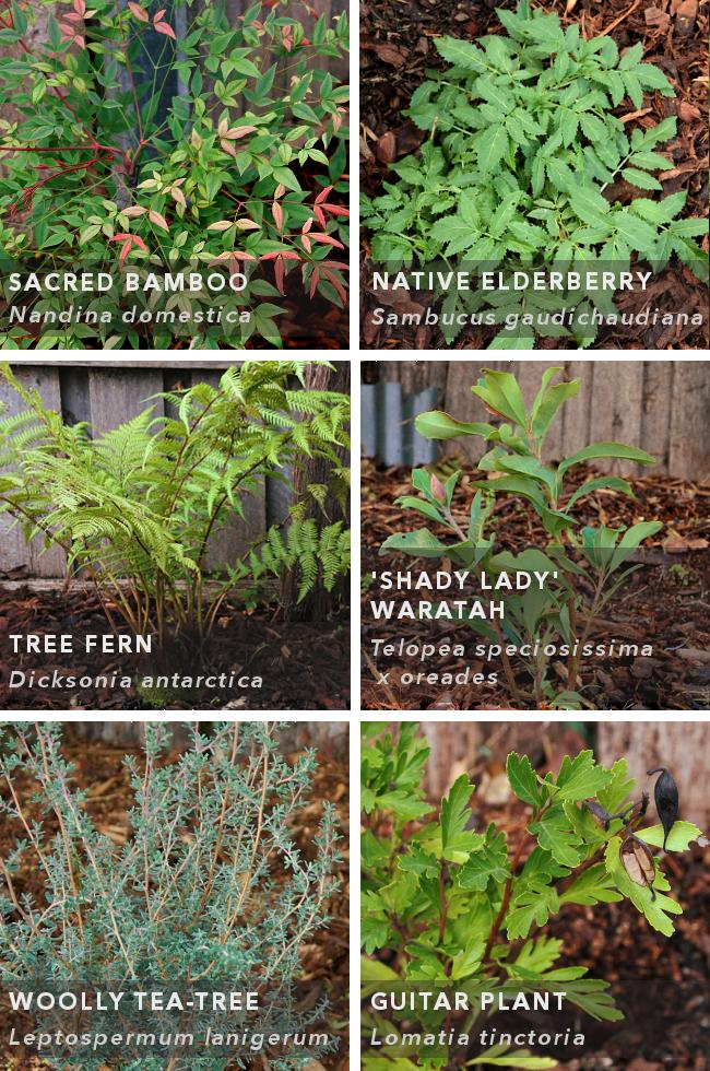 plant list - mixed border