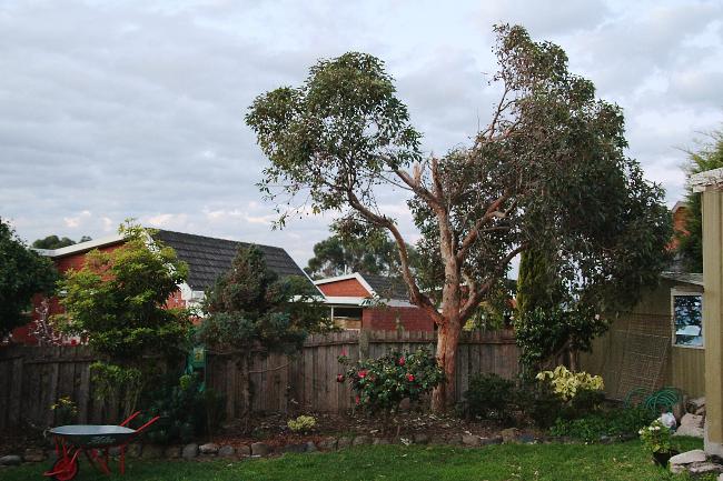 gum tree - after the break