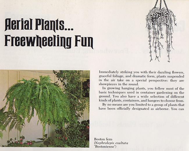Aerial Plants: Freewheeling Fun