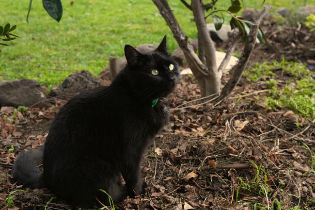 Mishka, boss cat.