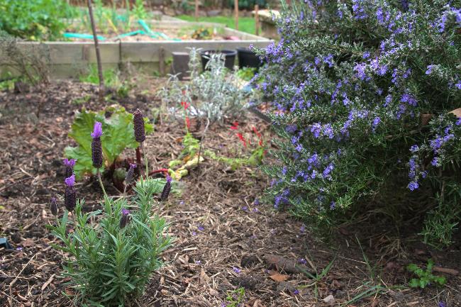 herb garden Aug 1