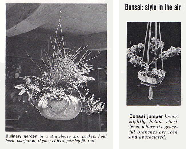 Hangers for herbs and bonsai (?)