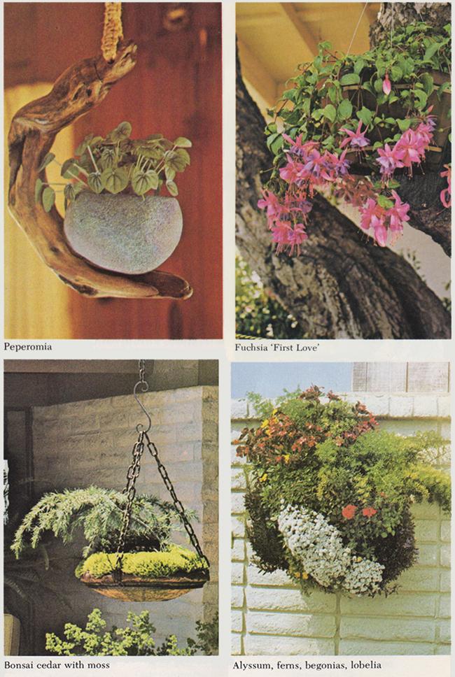 pretty hanging plants