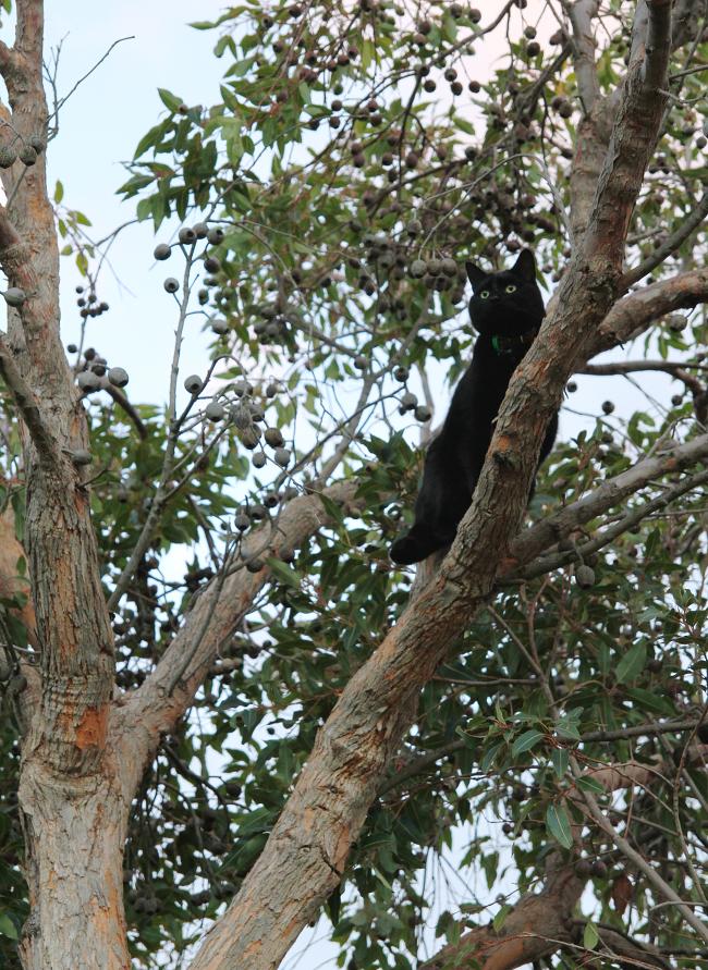 Mishka in a tree...