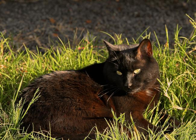 watchful Mishka