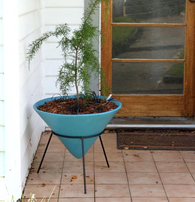 Huon pine cone planter