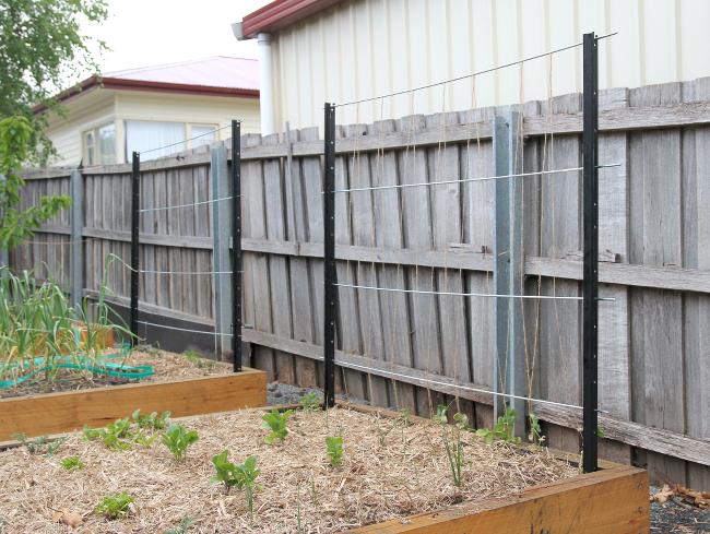 fence post trellis