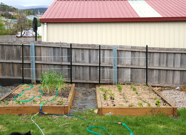 raised garden beds with grids