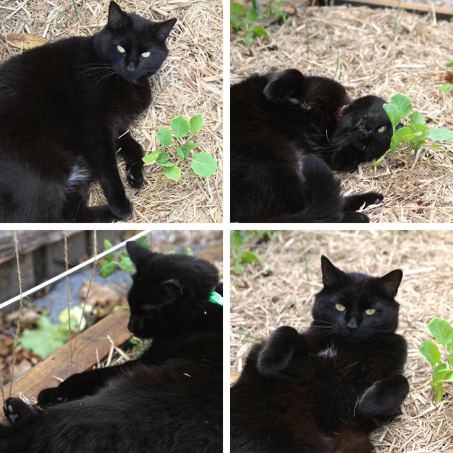 garden bed cat