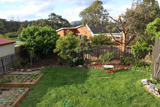 Garden beds in yard