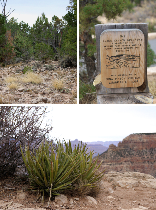 Grand Canyon plants