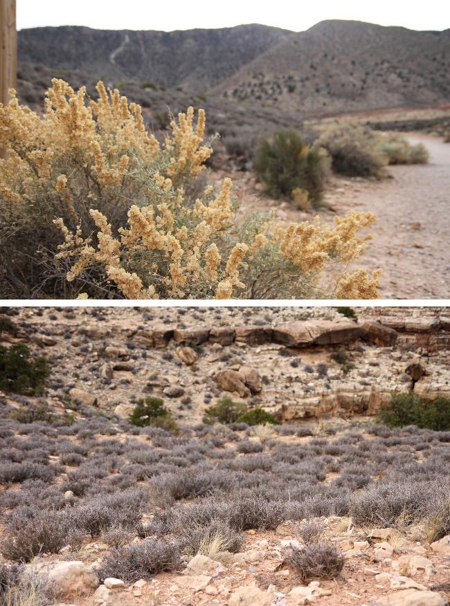 Painted desert scrub