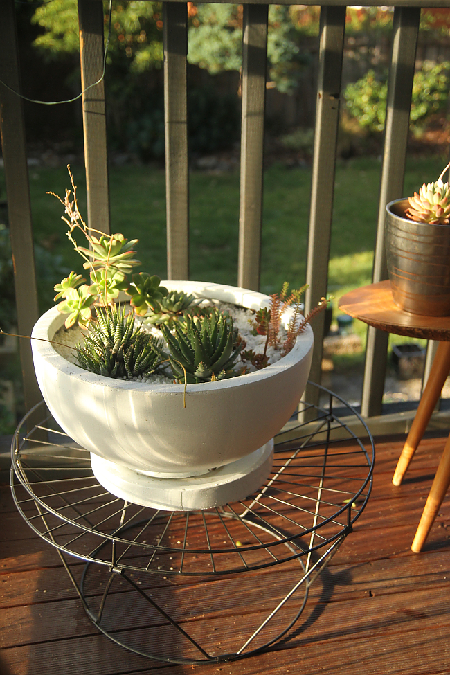 Succulent planter / wire plant stand