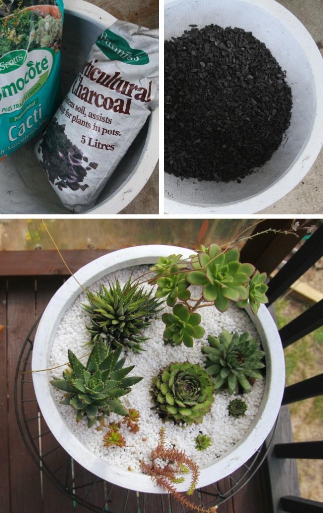 Succulent planting process