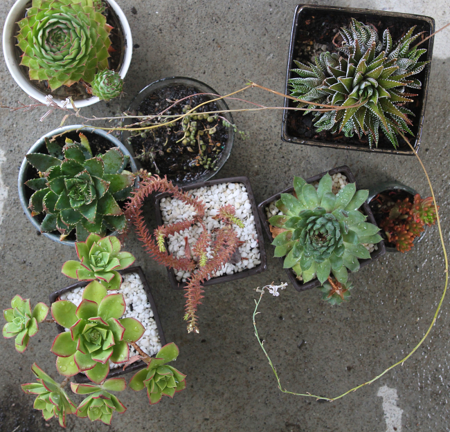 Succulent pot collection